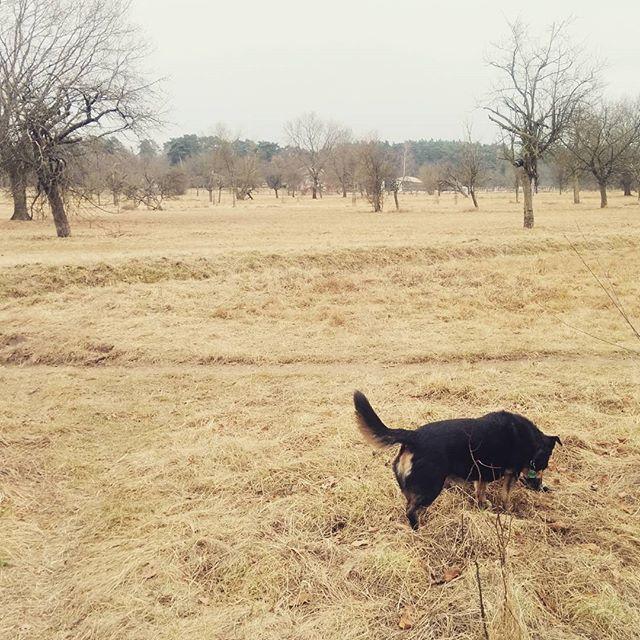 Noch-nicht-Frühling mit Hund